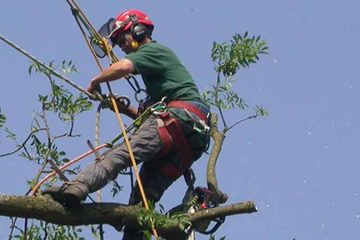 Tree Surgery & Removal