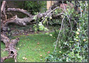 Tree Surgery Essex